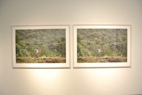 "Exhibition view of ""Today's Levitation 06/16/2011 (3D), 2012"" by Natsumi Hayashi"