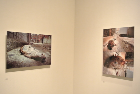 "Exhibition view of ""Nature on Roadside in Death"" series by Kimio Itozaki"