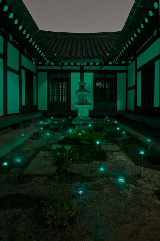 """Wild Time Flower in the Courtyard"" by Tatsuo Miyajima, in night time. Photo by Nobutada Omote."