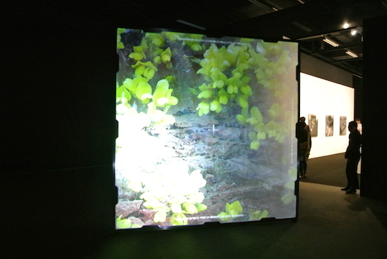 "Shiro Takatani ""frost frames"" 2000. Video installation. Projecting 30 images per second."